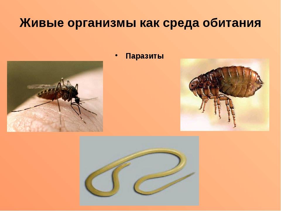 Живые организмы как среда обитания Паразиты