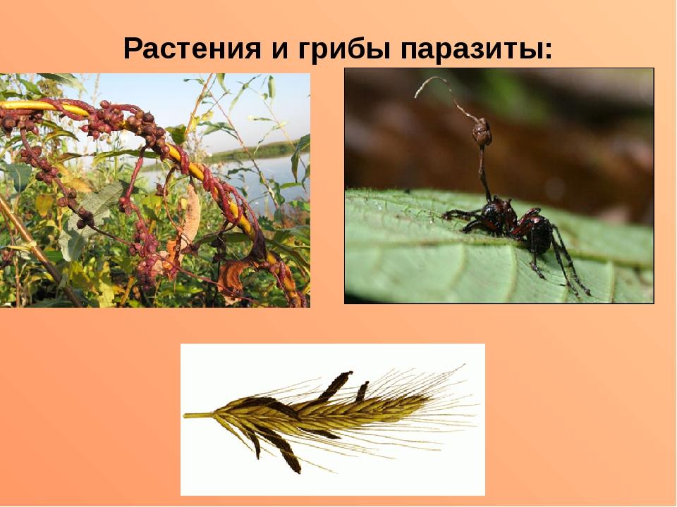 Растения и грибы паразиты: