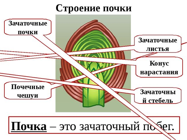 Домашнее задание § 22. Читать записи в тетради.