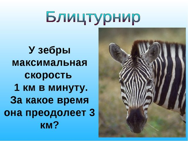 У зебры максимальная скорость 1 км в минуту. За какое время она преодолеет 3...