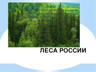 ЛЕСА РОССИИ Зона лесов занимает больше половины территории России. Но заселен