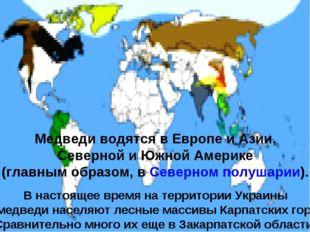 Медведи водятся в Европе и Азии, Северной и Южной Америке (главным образом, в