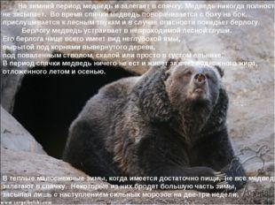 На зимний период медведь и залегает в спячку. Медведь никогда полностью не з