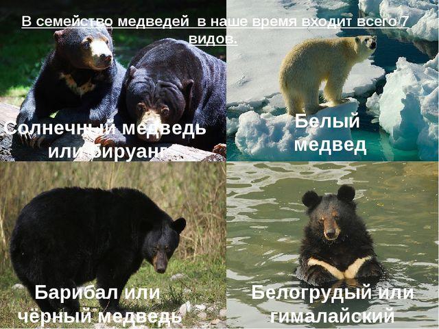 Бурый медведь Белый медведь Барибал или чёрный медведь Белогрудый или гималай...