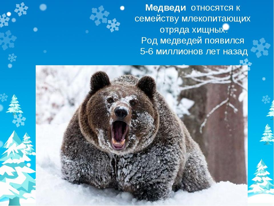 Медведи относятся к семейству млекопитающих отряда хищных. Род медведей появи...