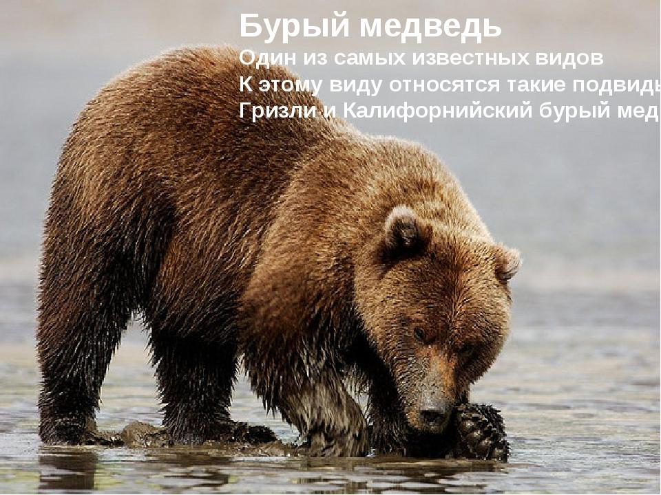 Бурый медведь Один из самых известных видов К этому виду относятся такие подв...