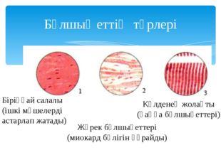 Бұлшық еттің түрлері Біріңғай салалы (ішкі мүшелерді астарлап жатады) Жүрек б