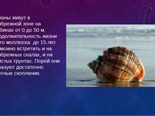 Рапаны живут в прибрежной зоне на глубинах от 0 до 50 м. Продолжительность жи