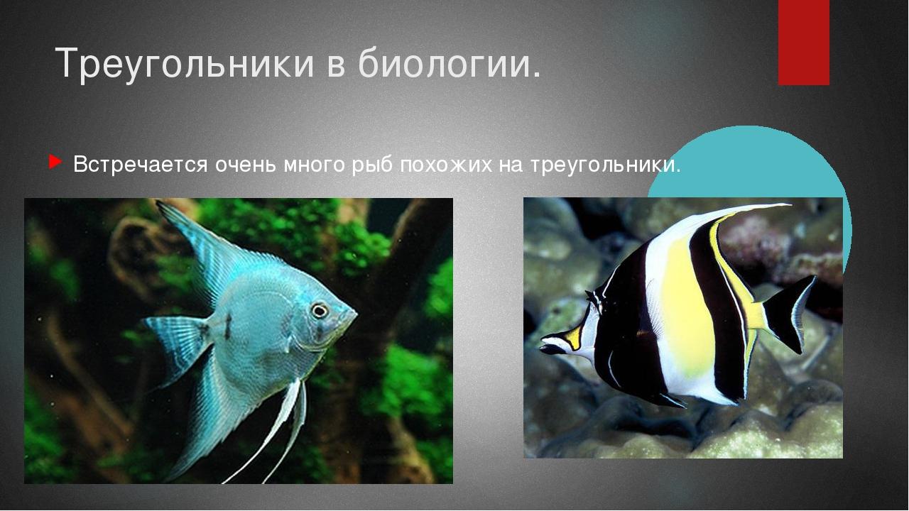 Треугольники в биологии. Встречается очень много рыб похожих на треугольники.