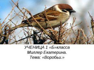 УЧЕНИЦА 1 «Б»класса Миллер Екатерина. Тема: «Воробьи.»