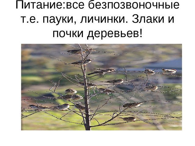 Питание:все безпозвоночные т.е. пауки, личинки. Злаки и почки деревьев!