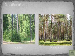 Широколиственный лес БЕРЁЗОВАЯ РОЩА ОСИННИК