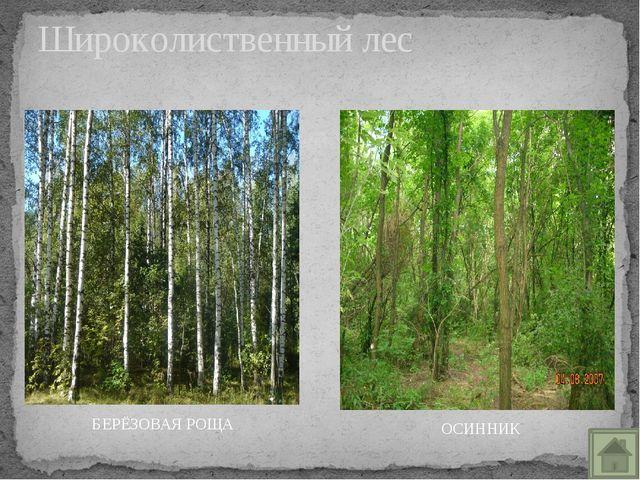 Хищные звери лесов БУРЫЙ МЕДВЕДЬ ВОЛК РЫСЬ ЛИСИЦА