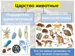 Царство животные Подцарство одноклеточные (простейшие) Подцарство многоклеточ