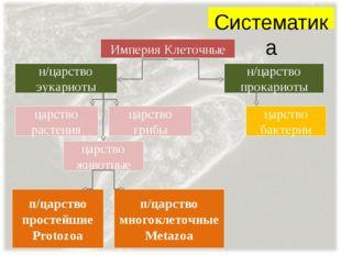 Систематика Империя Клеточные н/царство эукариоты н/царство прокариоты царств