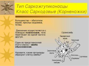 Тип Саркожгутиконосцы Класс Саркодовые (Корненожки) Большинство – обитатели м