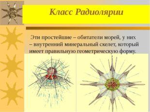 Класс Радиолярии Эти простейшие – обитатели морей, у них – внутренний минерал