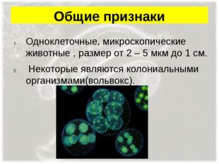 Общие признаки Одноклеточные, микроскопические животные , размер от 2 – 5 мкм