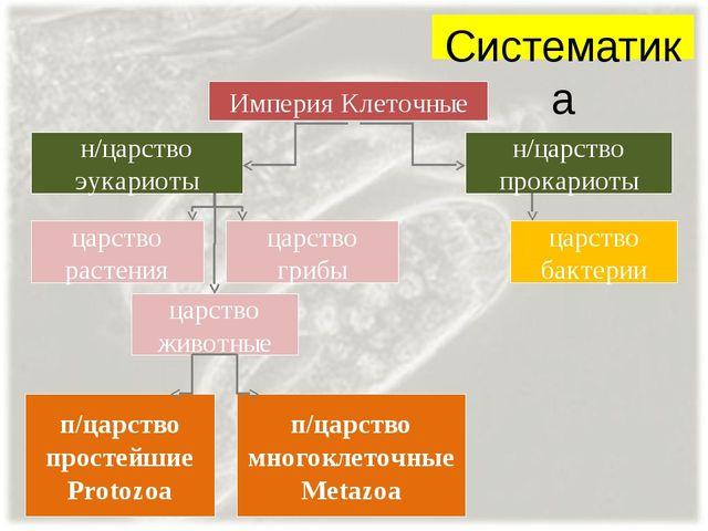 Систематика Империя Клеточные н/царство эукариоты н/царство прокариоты царств...