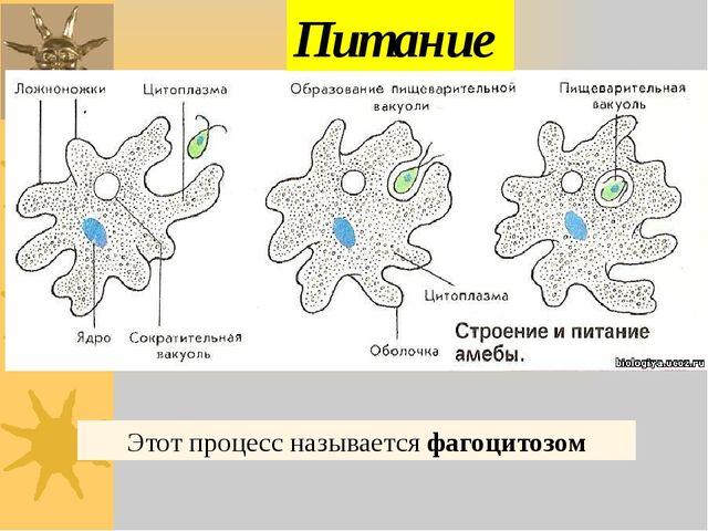 Этот процесс называется фагоцитозом Питание