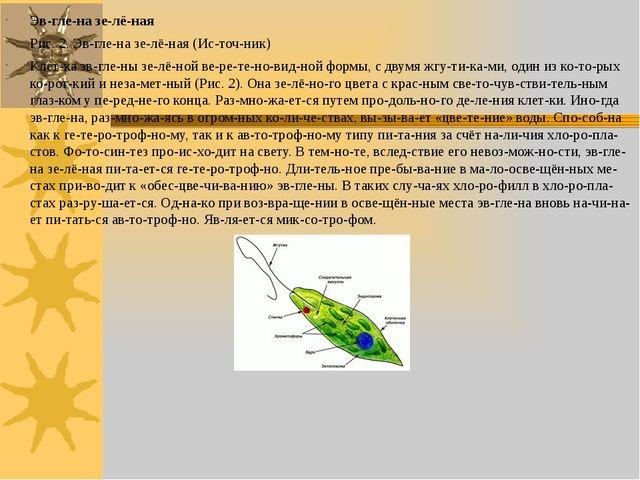 Эвглена зелёная Рис. 2. Эвглена зелёная (Источник) Клетка эвгле...