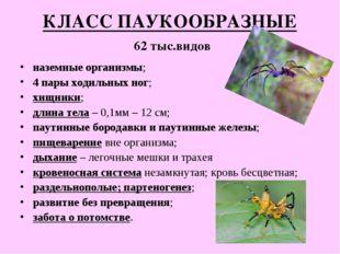 КЛАСС ПАУКООБРАЗНЫЕ 62 тыс.видов наземные организмы; 4 пары ходильных ног; хи