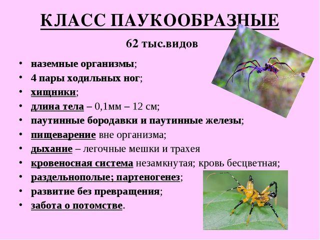 КЛАСС ПАУКООБРАЗНЫЕ 62 тыс.видов наземные организмы; 4 пары ходильных ног; хи...