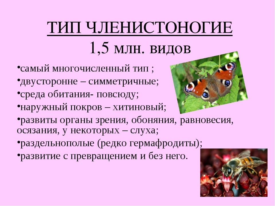 ТИП ЧЛЕНИСТОНОГИЕ 1,5 млн. видов самый многочисленный тип ; двусторонне – сим...
