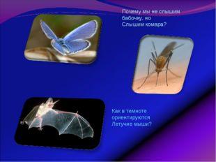 Почему мы не слышим бабочку, но Слышим комара? Как в темноте ориентируются Ле