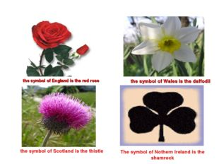 the symbol of England is the red rose the symbol of Wales is the daffodil th