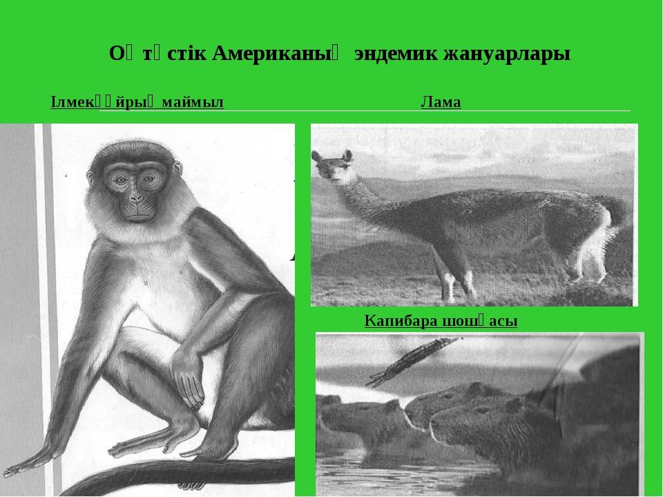 Оңтүстік Американың эндемик жануарлары Ілмекқұйрық маймыл Лама Капибара шошқасы
