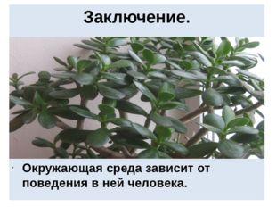Заключение. Окружающая среда зависит от поведения в ней человека.