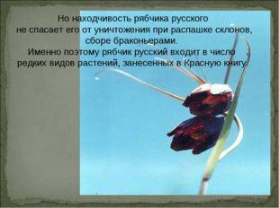 Но находчивость рябчика русского не спасает его от уничтожения при распашке