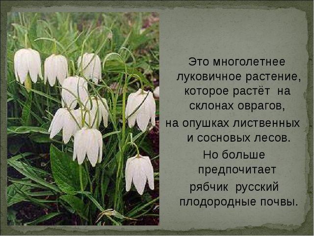 Это многолетнее луковичное растение, которое растёт на склонах оврагов, на о...