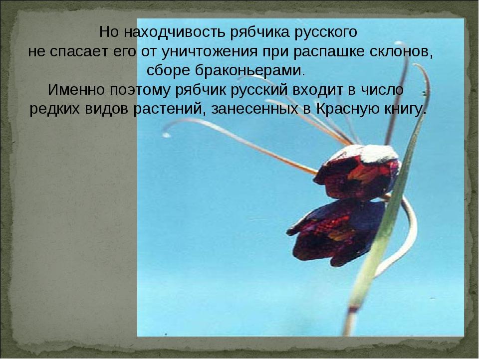 Но находчивость рябчика русского не спасает его от уничтожения при распашке...