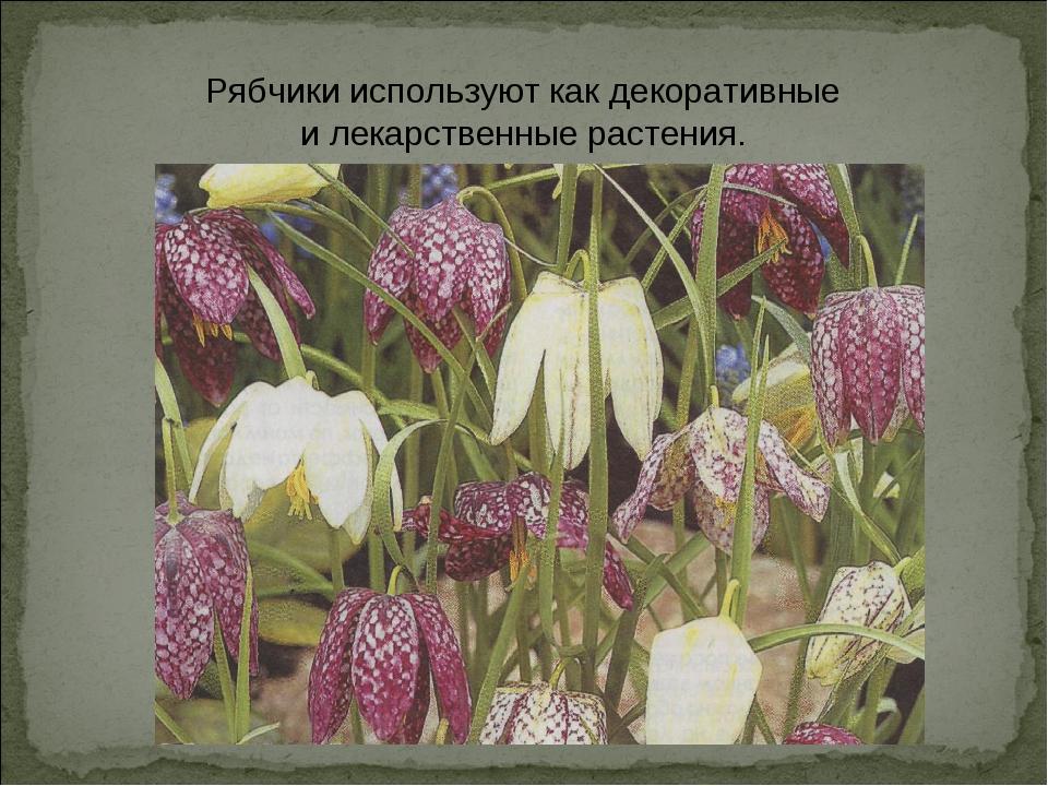 Рябчики используют как декоративные и лекарственные растения.