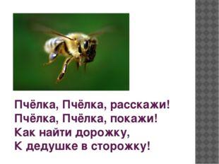 Пчёлка, Пчёлка, расскажи! Пчёлка, Пчёлка, покажи! Как найти дорожку, К дедуш