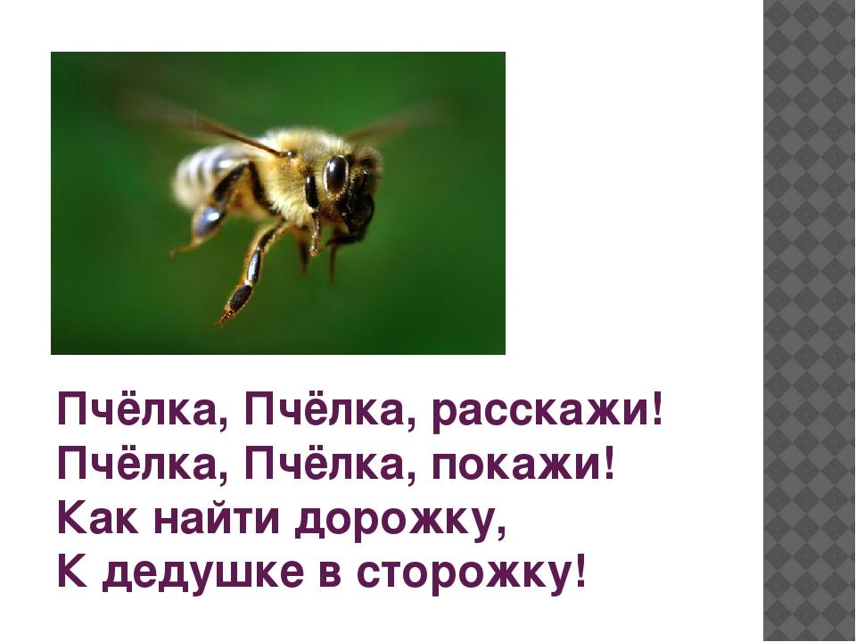 Пчёлка, Пчёлка, расскажи! Пчёлка, Пчёлка, покажи! Как найти дорожку, К дедуш...