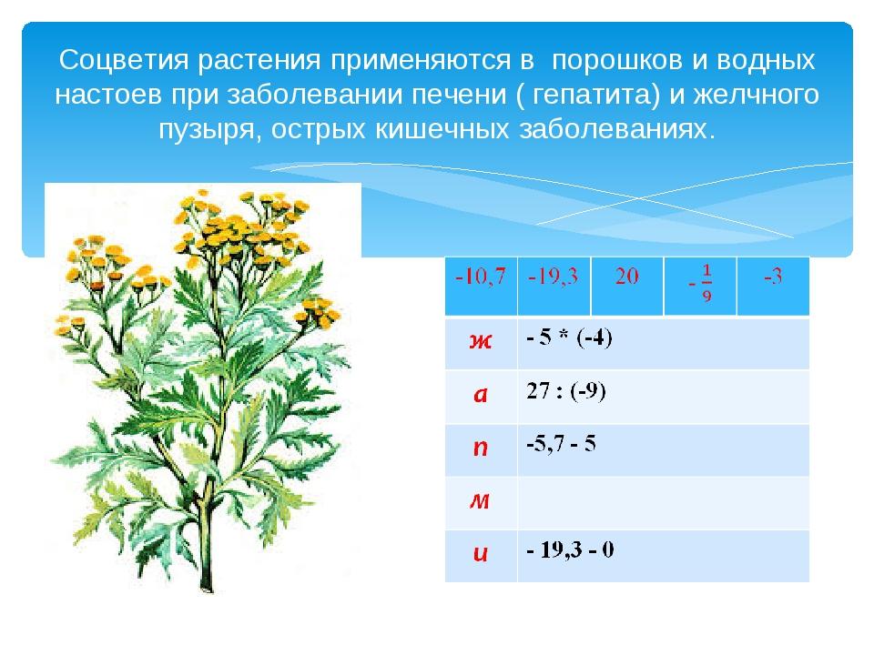 Соцветия растения применяются в порошков и водных настоев при заболевании печ...