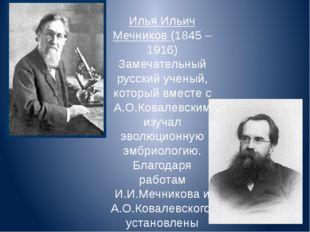 Илья Ильич Мечников (1845 – 1916) Замечательный русский ученый, который вмест