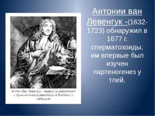 Антонии ван Левенгук -(1632-1723) обнаружил в 1677 г. сперматозоиды, им вперв