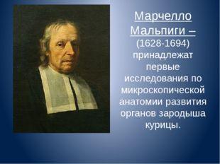 Марчелло Мальпиги – (1628-1694) принадлежат первые исследования по микроскопи