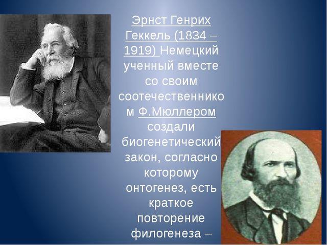 Эрнст Генрих Геккель (1834 – 1919) Немецкий ученный вместе со своим соотечест...