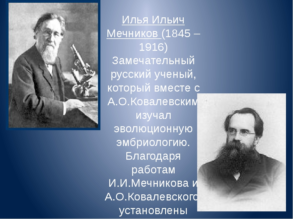 Илья Ильич Мечников (1845 – 1916) Замечательный русский ученый, который вмест...
