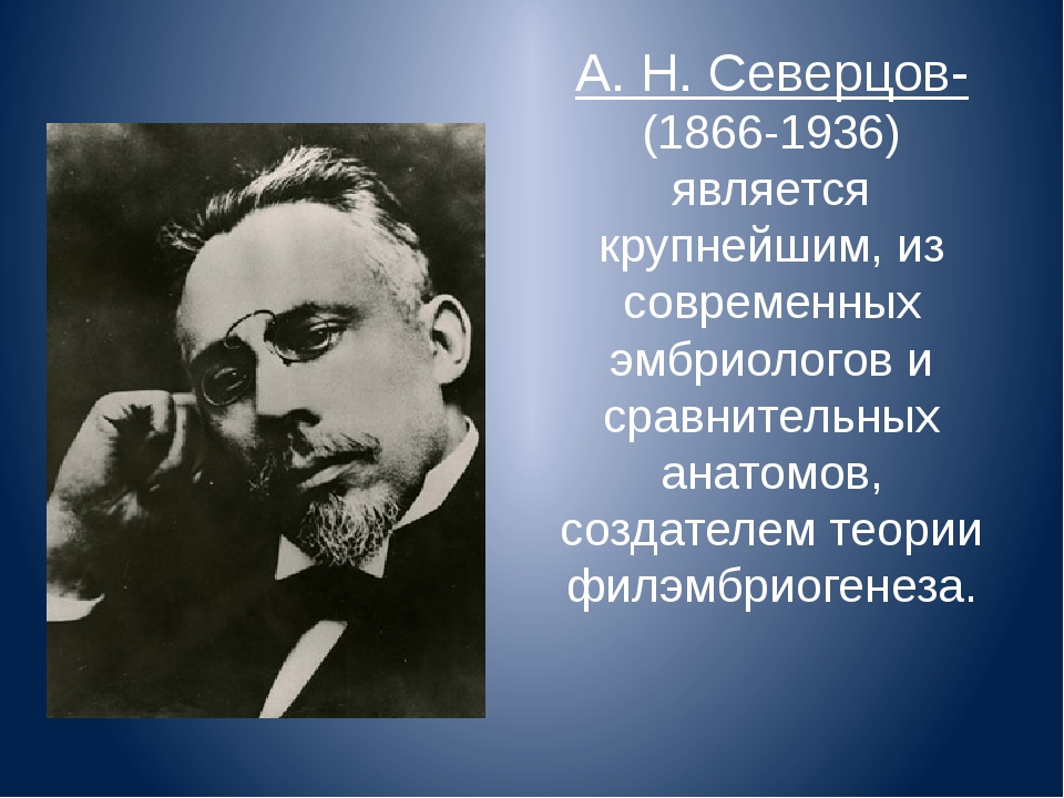 А. Н. Северцов- (1866-1936) является крупнейшим, из современных эмбриологов и...