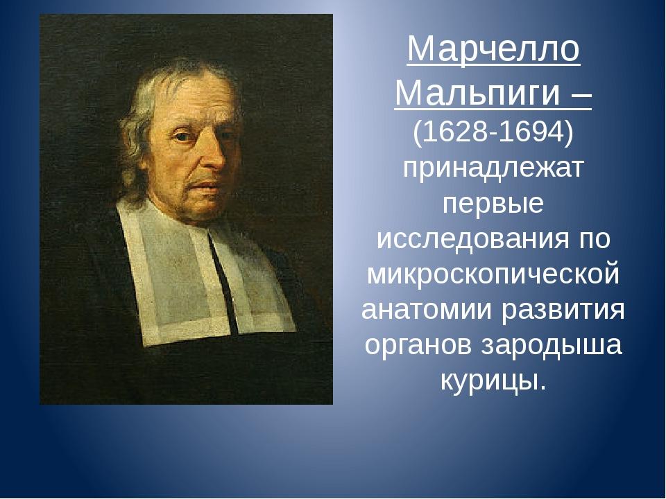 Марчелло Мальпиги – (1628-1694) принадлежат первые исследования по микроскопи...
