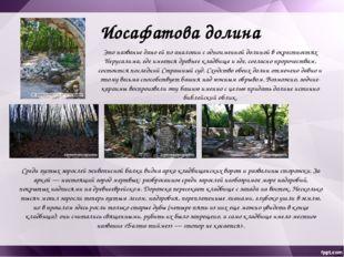 Скалы, камни, пустынность и общий библейский вид Чуфут-Кале и Иосафатовой дол