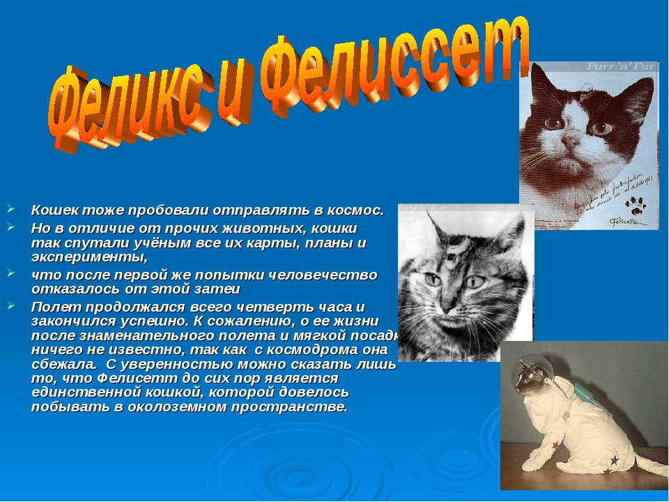 Кошек тоже пробовали отправлять в космос. Но в отличие отпрочих животных,...