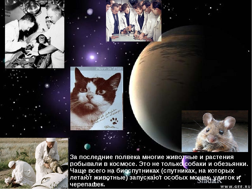 За последние полвека многие животные и растения побывали в космосе. Это не то...