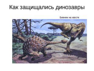 Как защищались динозавры Бивнем на хвосте Бивнем на хвосте